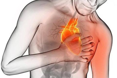 Los beneficios del CBD para proteger nuestro sistema cardiovascular