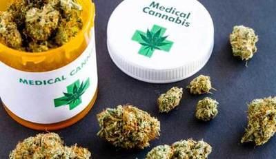 Investigadores andaluces crean medicina con cannabis para terapia antidolor