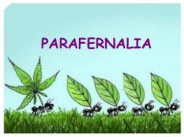 Parafernalia-Headshop